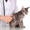 Ветеринарные клиники в Питкяранте